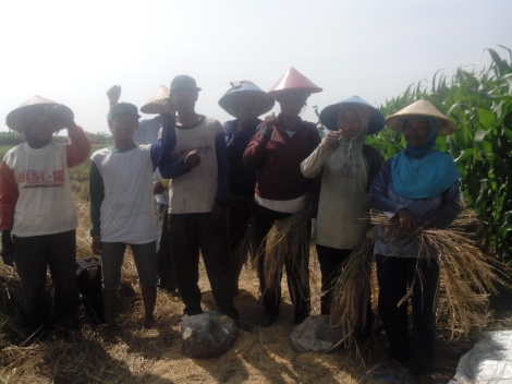 Achdan (dua dari kiri) bersama petani PT3S Desa Kuripan. | Foto: Dahlia